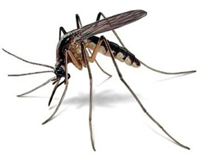 Se identificaron más de 20 productos terapéuticos capaces de bloquear la infección por Zika.